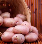 Potato super food